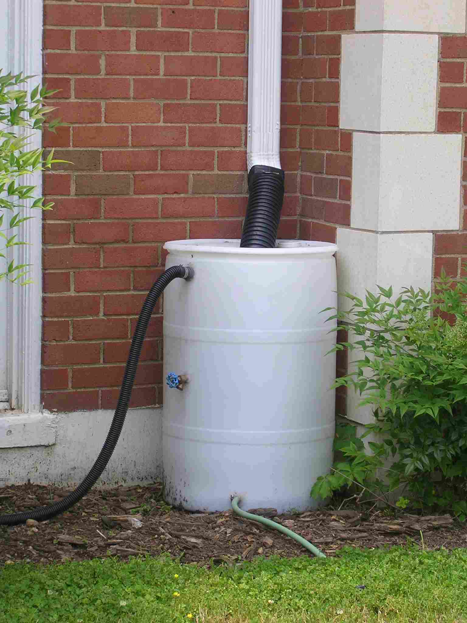 Downspout connected to rain barrel