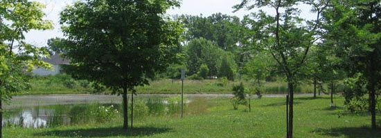 a shot of a pond and surrounding trees in the Little River Corridor